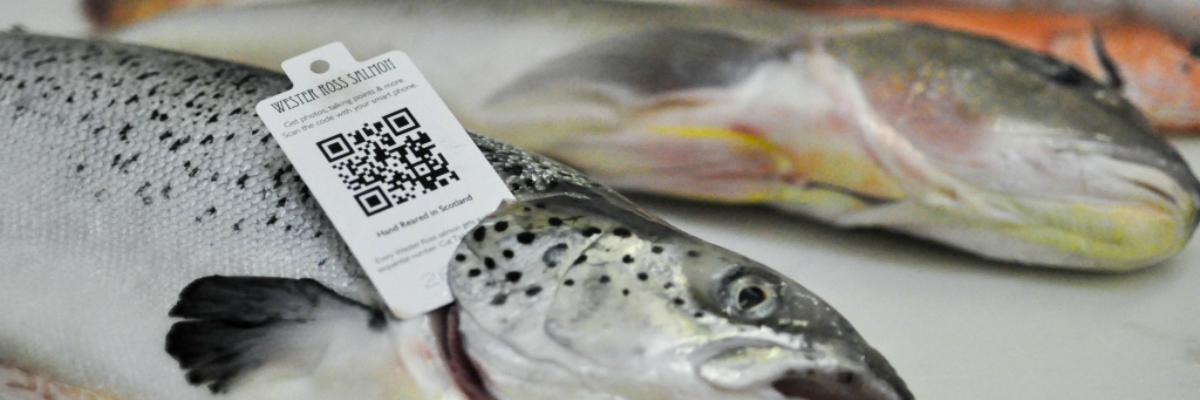 L'identification et la traçabilité : un défi et une solution pour mettre en valeur les poissons et fruits de mer du Saint-Laurent