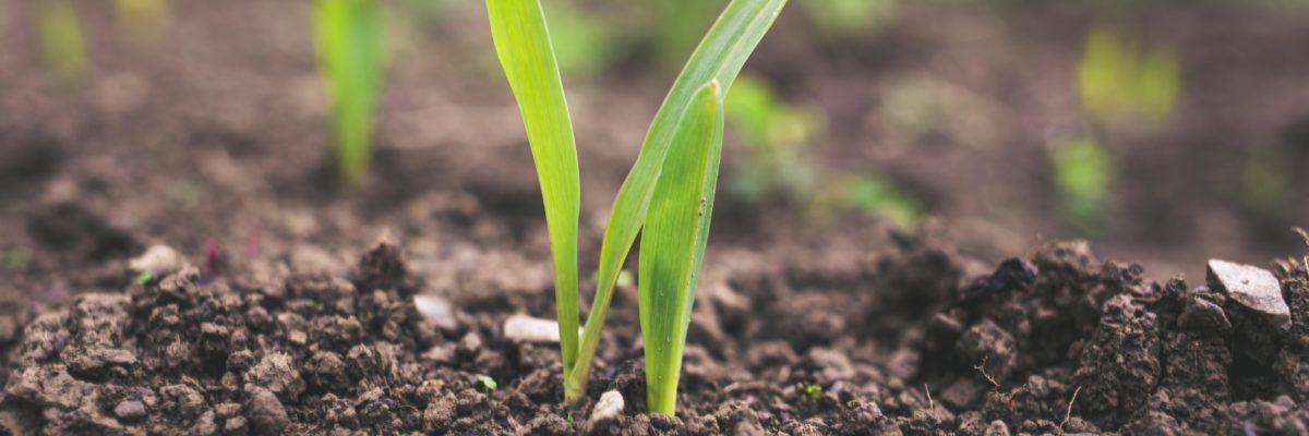 Publication d'un rapport sur les incubateurs d'entreprises agricoles au Québec