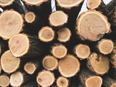 L'unité d'intervention AGROFOR : pour propulser les filières agricoles et forestières