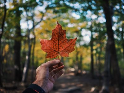 Programme Investir dans le Canada : le Québec, grand perdant