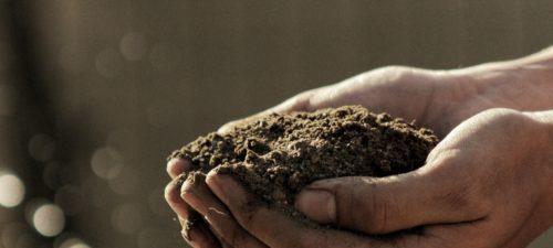 l'économie de la décontamination des sols par les plantes
